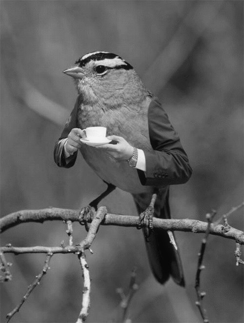 A cup of tea sir