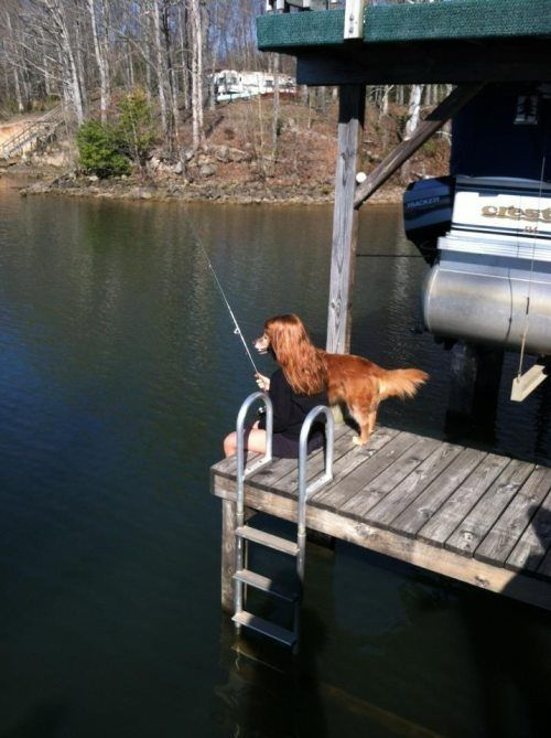 A dog fishing