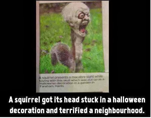 A squirrel got its head stuck