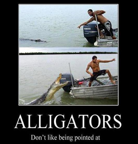 Alligators Dont Like Being Pointed At