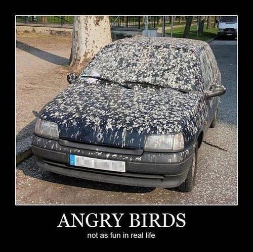 Angry Birds Not as funny in real life
