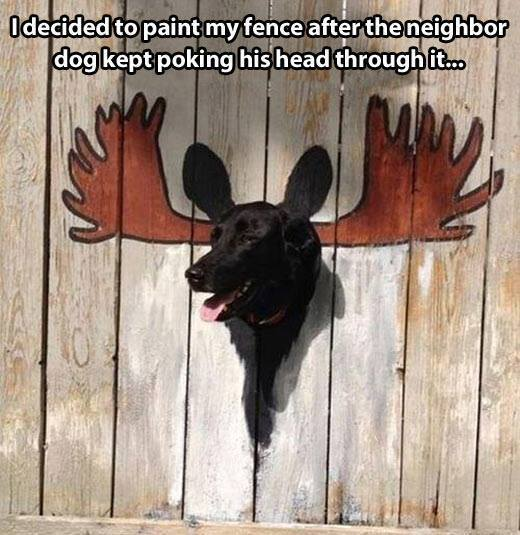 At least it looks funny when the dog pokes his head through the fence now