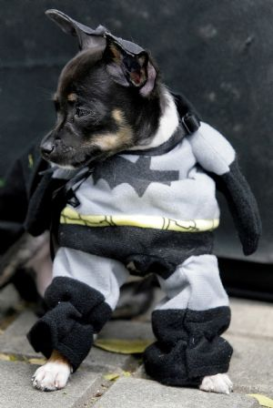 Batman starring DOG