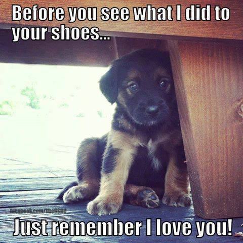 Before you see what I did to your shoes...