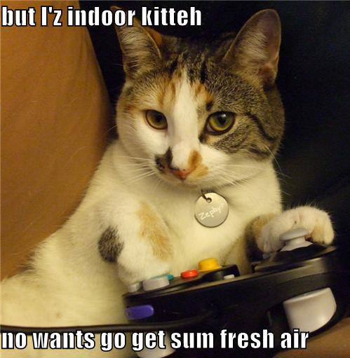 But iz indoor kitteh