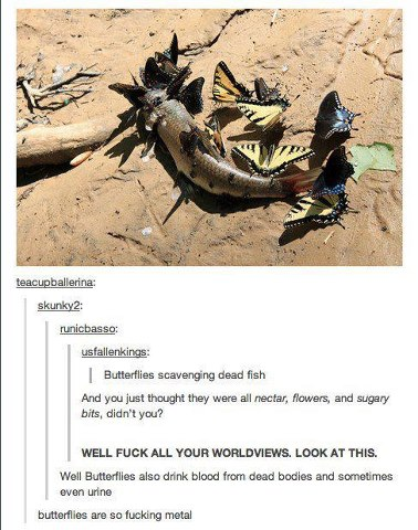 Butterflies are mental