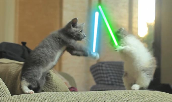 Cats With Lightsabers Gif   www.pixshark.com - Images ...