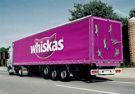 Cats with loads of Whiskas
