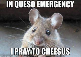 Cheesus will save us all