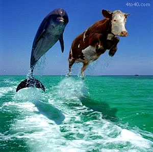 Dolphin and a Cow Seems Legit