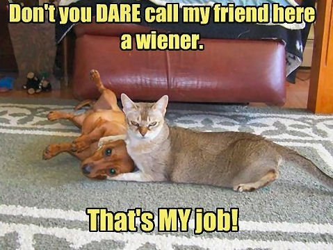 Dont you dare call my friend here a wiener