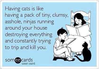 Having cats is like...