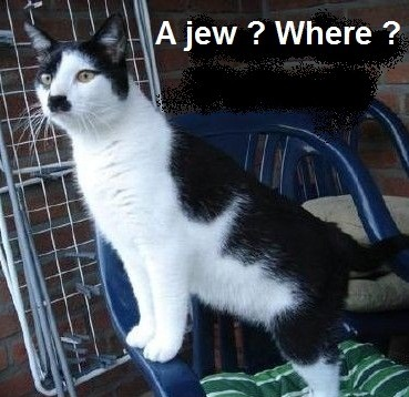 Hitler Cat isnt happy