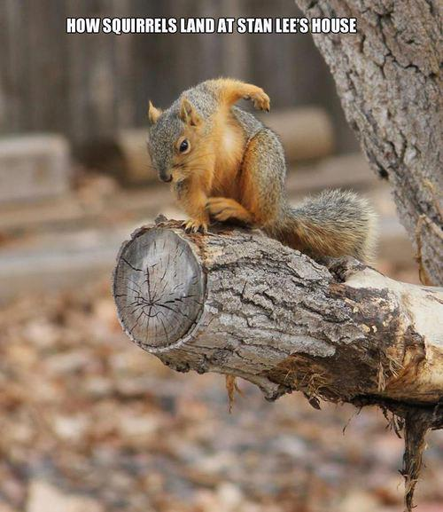How Squirrels Land At Stan Lees House