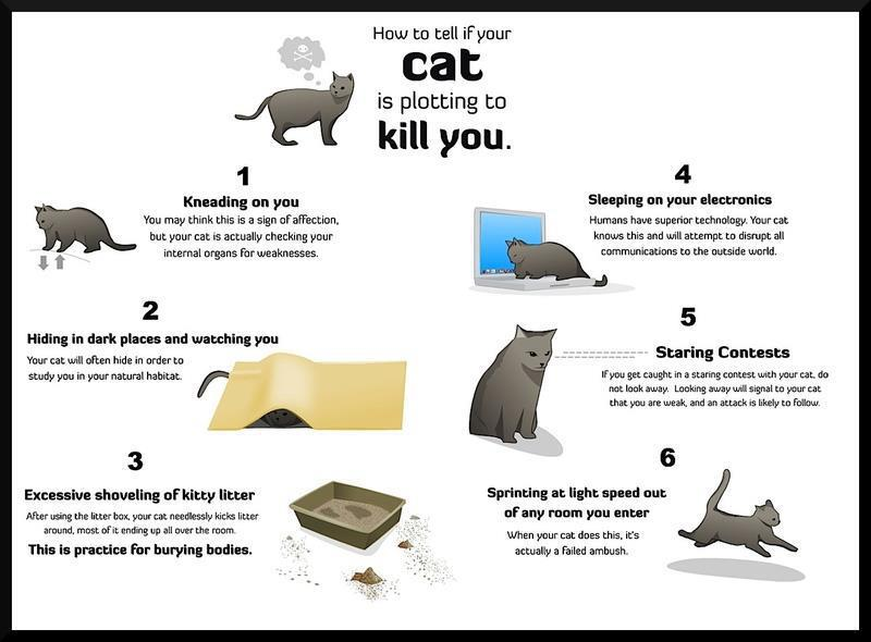 how to kill a cat What, courage man what though care killed a cat, thou hast mettle enough in thee to kill care the proverbial expression 'curiosity killed the cat',.