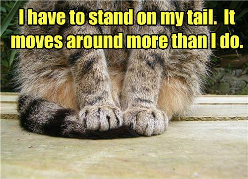I have to stand on my tail