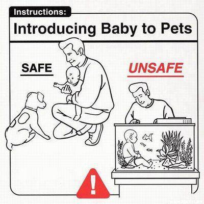 Introducing Babies To Pets