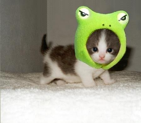 Kitty Frog