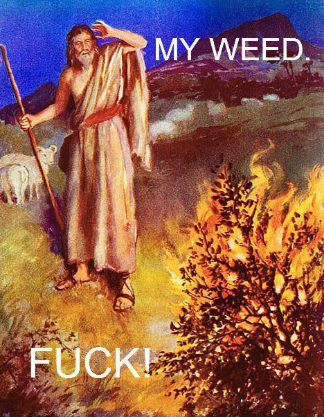 My Weed