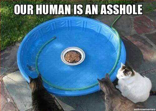 Our human is an asshole