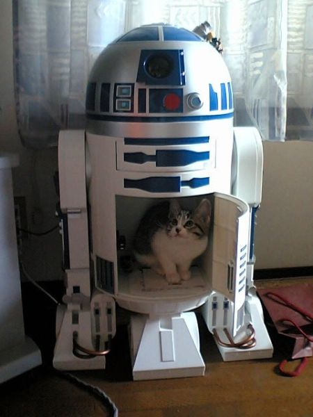 This is not the cat you are looking for