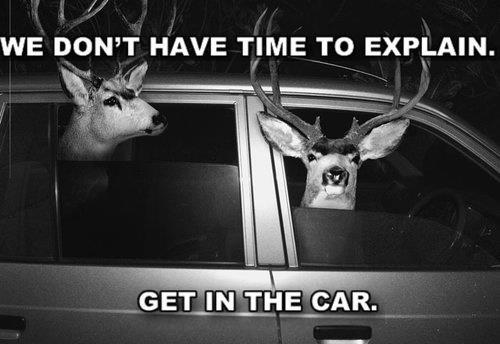 We don't have time to explain GET IN THE CAR