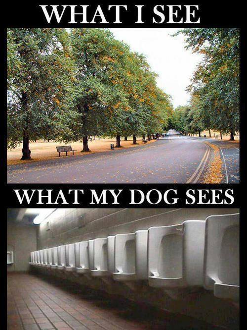 What I see what my dog sees