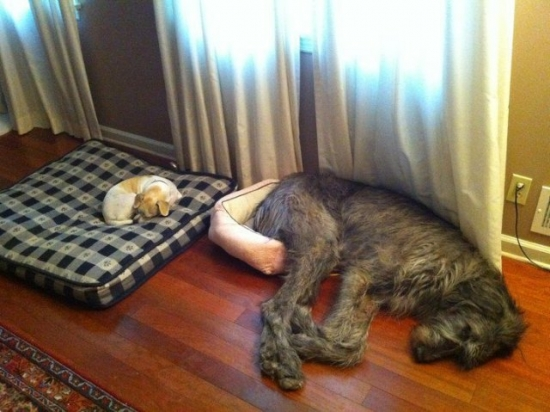A Dog Bed Each