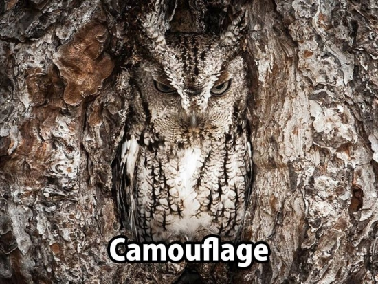 Camouflage sometimes does work