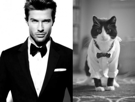 Cats That Look Like Male Models 1
