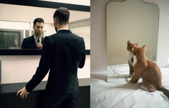 Cats That Look Like Male Models 4