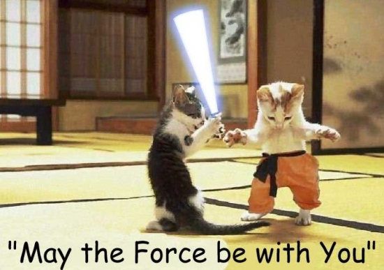 Cats with lightsabers 23