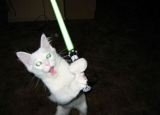 Cats with lightsabers 8