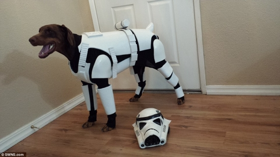 Dog in Stormtrooper outfit