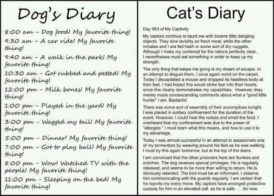 Dog vs Cat Diary