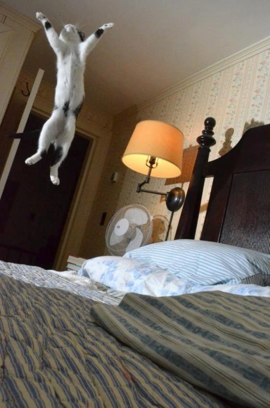 Flying Cat Is Flying