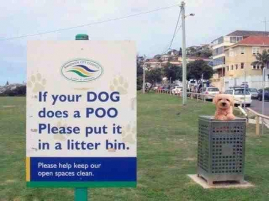 If your dog does a poo...