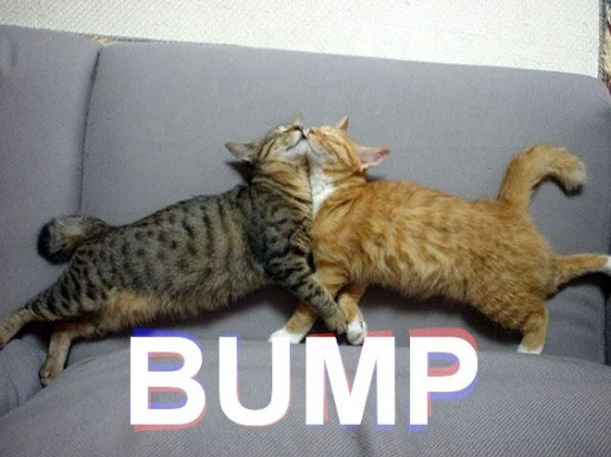 http://imghumour.com/assets/Uploads/_resampled/SetWidth550-Lets-Bump.jpg