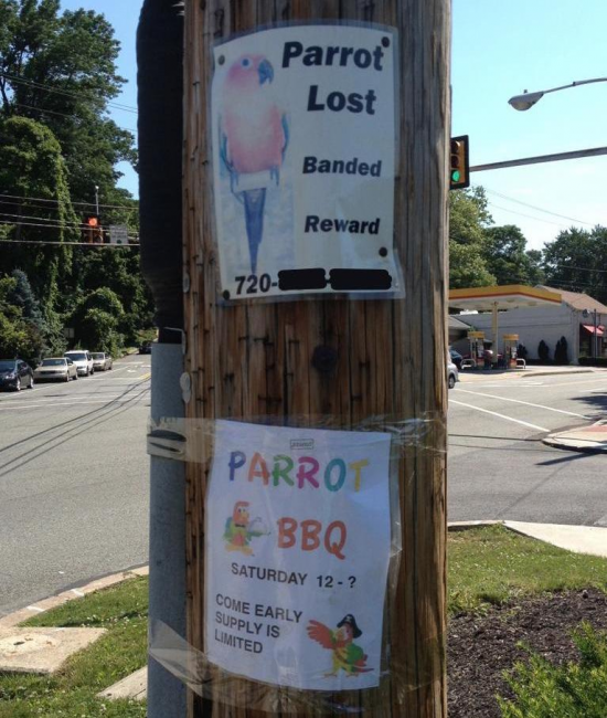 Lost Found Parrot