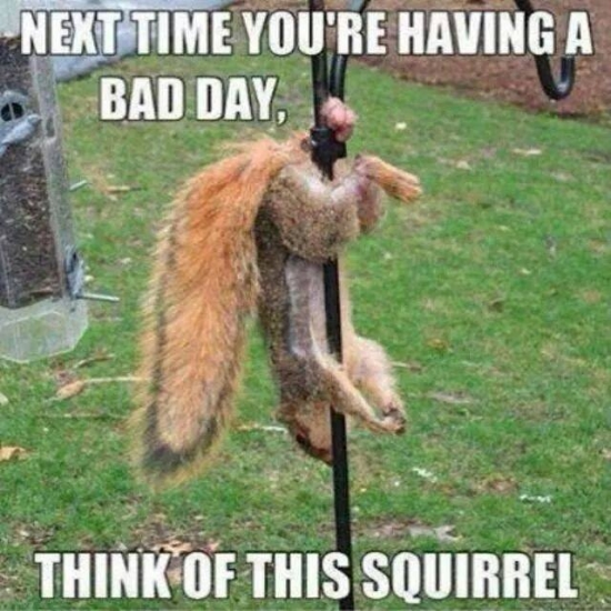 Next time youre having a bad day...