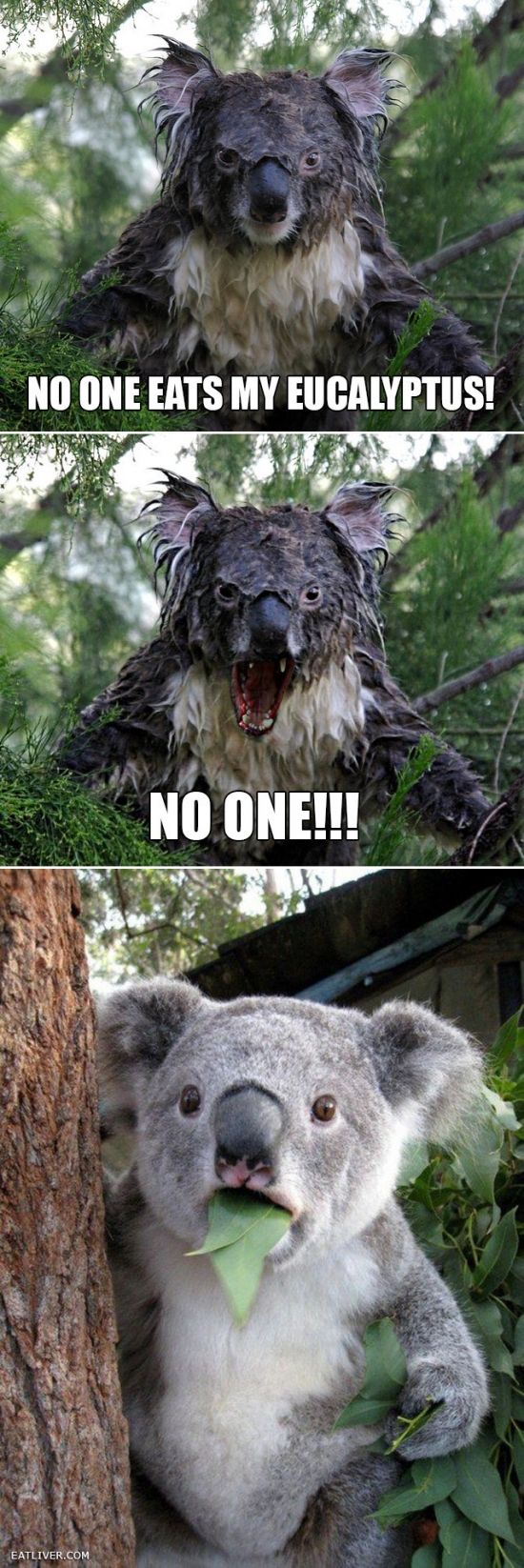 No One Eats My Eucalypus