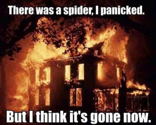 There was a Spider.. I Panicked