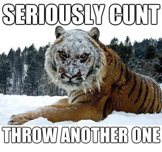 This Tiger is sick of your shit