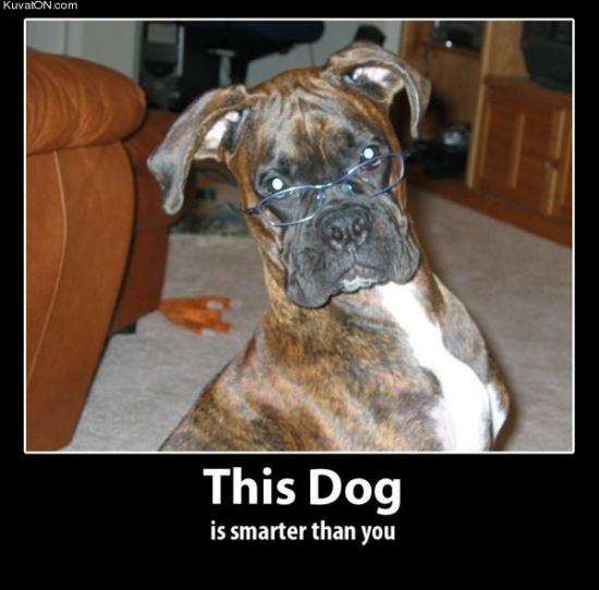 This dog is smarter than you2