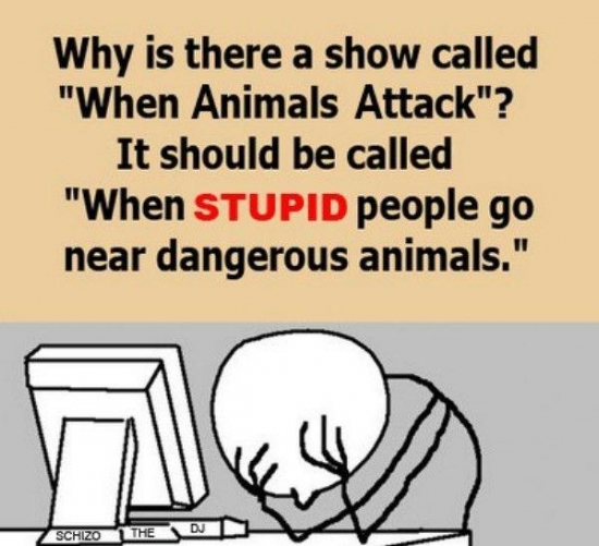 Why is there a show called When Animals Attack