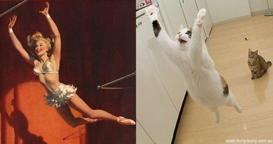cats that look like pin up girls 13