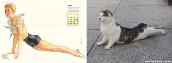 cats that look like pin up girls 17