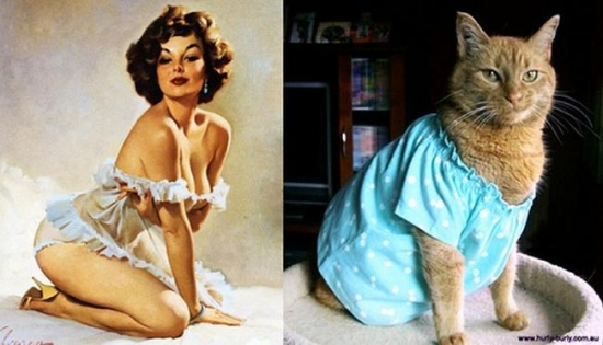 cats that look like pin up girls 21