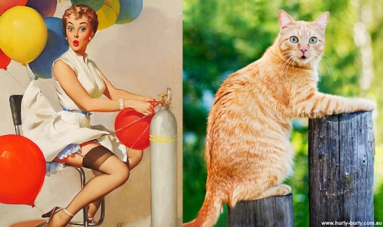 cats that look like pin up girls 4