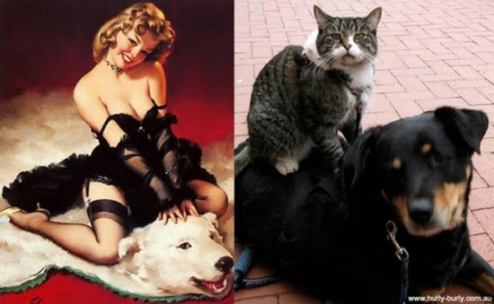 cats that look like pin up girls 5